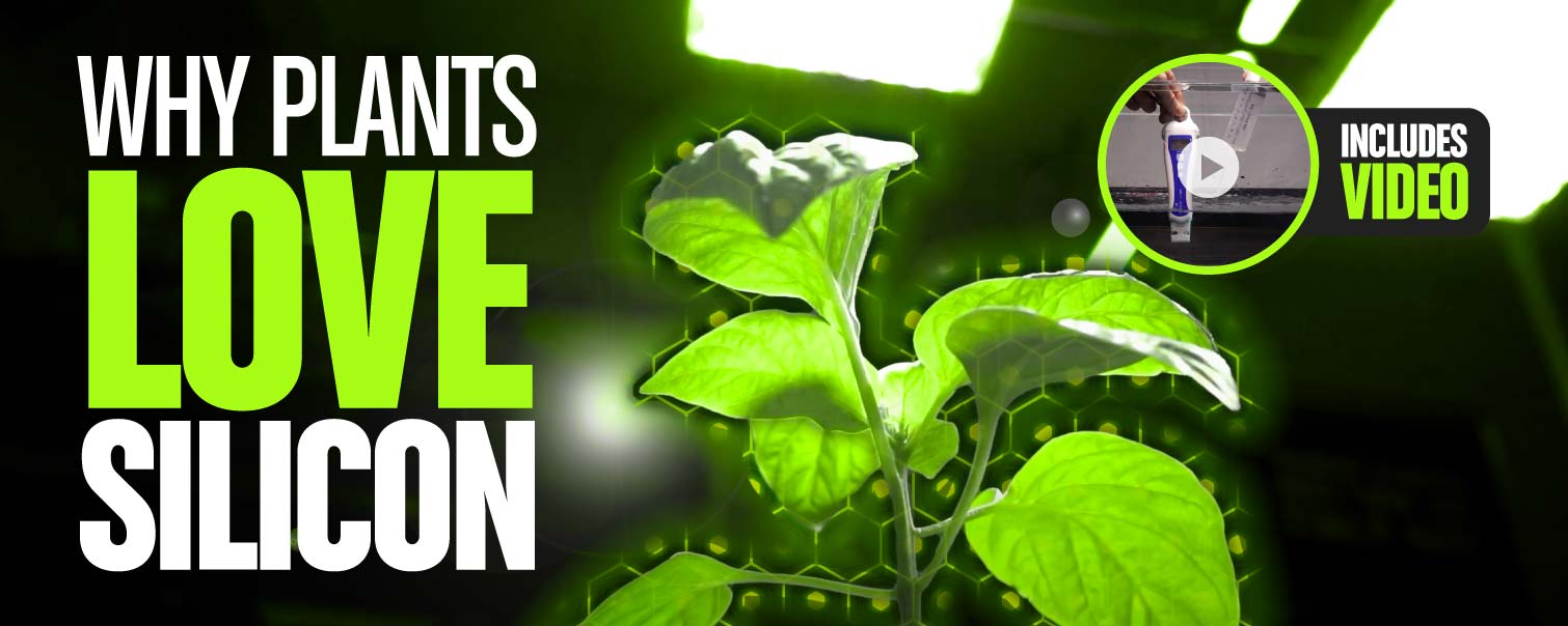 Why Plants LOVE Silicon