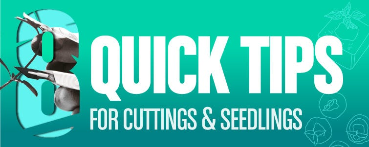 Top 8 Tips for Raising Cuttings and Seedlings