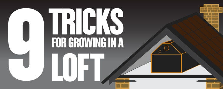 9 Tricks for Growing in the Loft or Attic