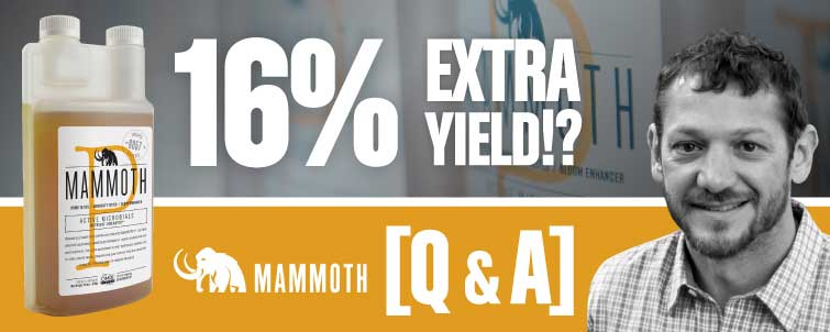 Mammoth P  - 16% Extra Yield!? [Q&A]