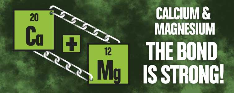 Calcium & Magnesium – the Bond is Strong!