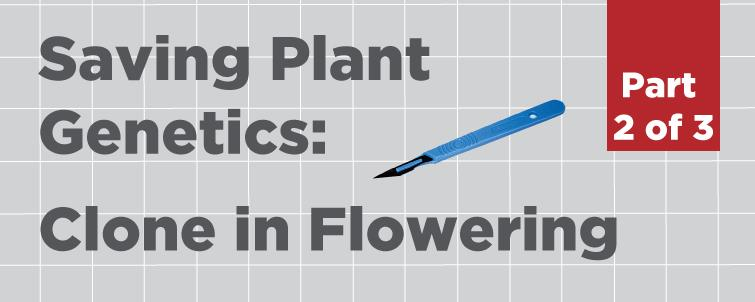 [Clone in Flowering] How to Save Plant Genetics (Part 2 of 3)
