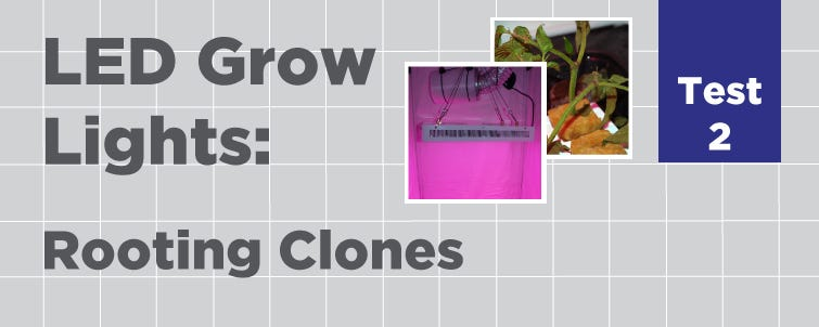 LED Test 2: Rooting Clones