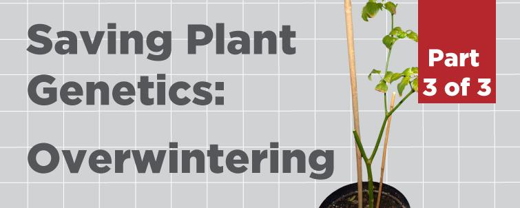 [Overwintering] How to Save Plant Genetics (Part 3 of 3)