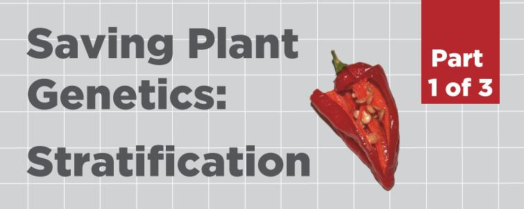 [Stratification] How to Save Plant Genetics (Part 1 of 3)