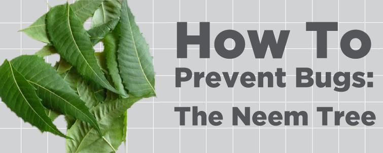 [The Neem Tree] How to Prevent Bugs