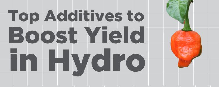 Top Additives to Boost Yield in Hydro!