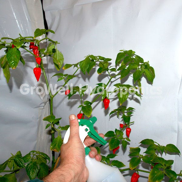 aphid spray