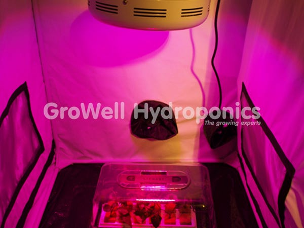 Cuttings and seeds in propagator