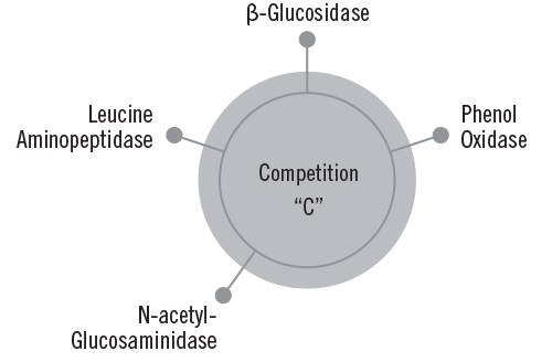 Competitor 'C' Enzyme