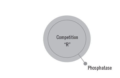 Competitor R Enzyme