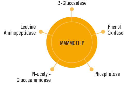 Mammoth P Enzyme