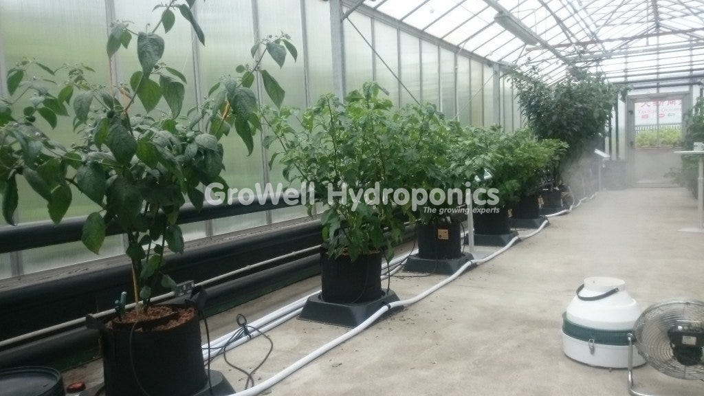 GroWell Sheffield Greenhouse
