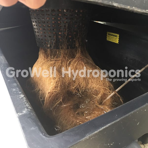 Roots in Bubbler