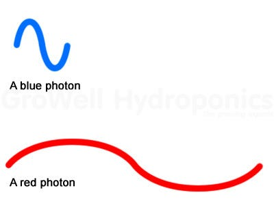 Photons and Micromoles